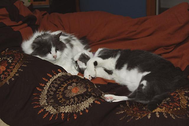 CatSnuggles2
